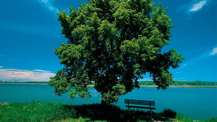 arbol-plantado-en-la-orilla-del-rio