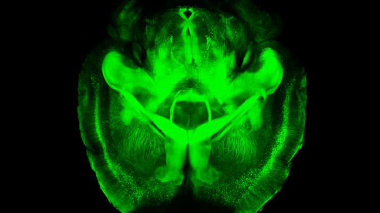cientificos-cerebro