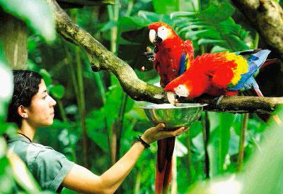 zoo-costa-rica