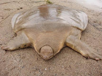 La tortuga de Cantor