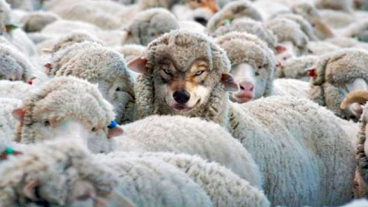 lobo-disfrazado