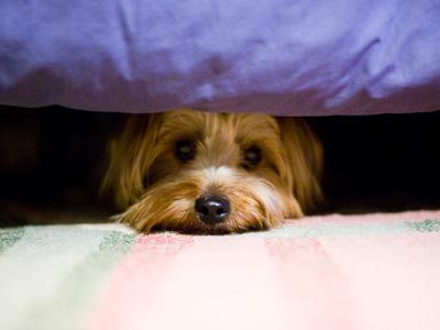 perro_asustado