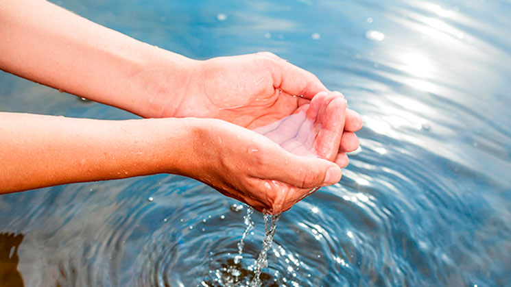 agua-viva